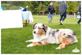Fore the Animals 2015-8354