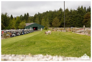 Fore the Animals 2015-8373
