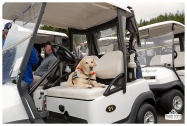 Fore the Animals 2015-8382