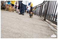 PetsWalk 2015-0523