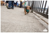 PetsWalk 2015-0524