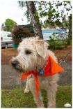 PetsWalk 2015-0576