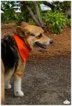 PetsWalk 2015-0595