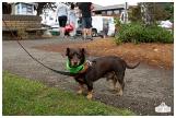 PetsWalk 2015-0604