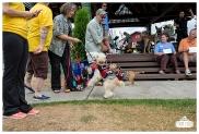 PetsWalk 2015-0691