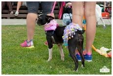 PetsWalk 2015-0695