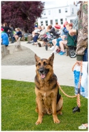 PetsWalk 2015-0723