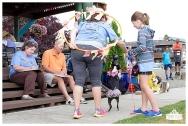 PetsWalk 2015-0725