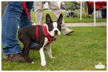 PetsWalk 2015-0797