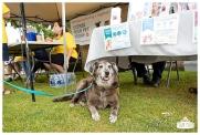 PetsWalk 2015-0814