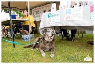 PetsWalk 2015-0815