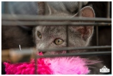 PetsWalk 2015-0818