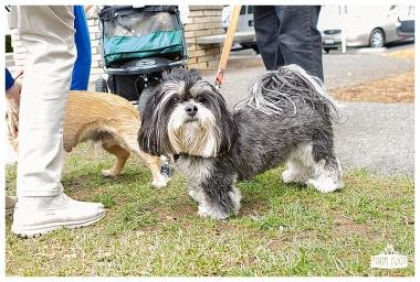 PetsWalk 2015-0825