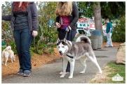 PetsWalk 2015-0830