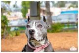PetsWalk 2015-0835