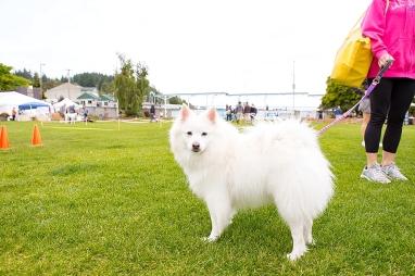 Wagfest 2016-0822